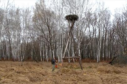 Охотоведы обрабатывают огнезащитной жидкостью места гнездования аистов