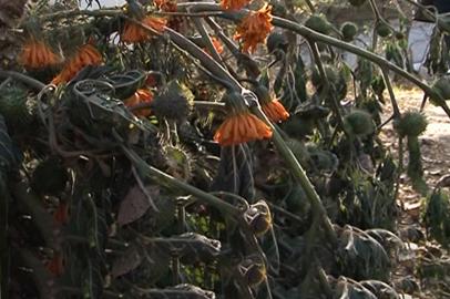В Белогорске дети отравились семенами травы, которая растёт на всех клумбах города