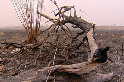 В Приамурье от огня спасают подкормочные площадки для диких животных