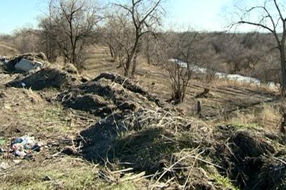 Жители Новопетровки считают, что администрация села, уничтожая коноплю, нарушила природоохранное законодательство