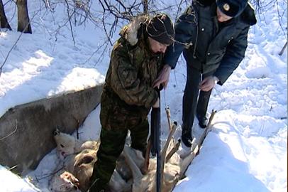 Трое жителей Зеи убили косулю на территории заповедника