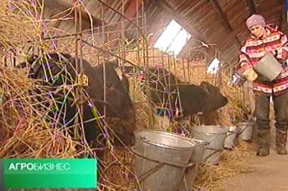 АГРОБИЗНЕС: о приросте молочной продуктивности коров