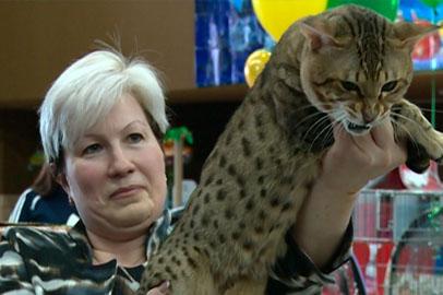 16 пород кошек представили на выставке в Благовещенске