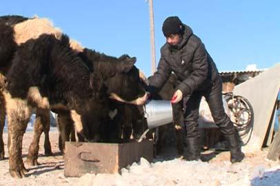 В Белогорском районе выросло число личных подсобных хозяйств