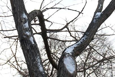 Осадки не слишком повлияли на пожароопасную обстановку в Приамурье