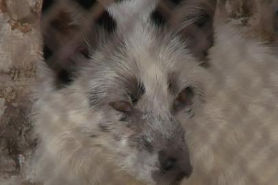 Областной эколого-биологический центр ищет опекунов для животных