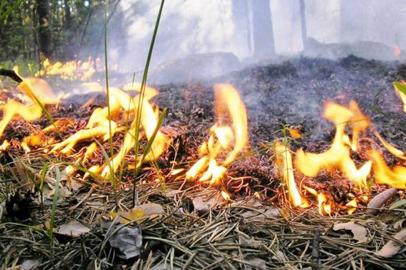 За разведение огня на природе штрафуют по завышенным ставкам