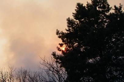 Шимановск и Новобурейский накрыло дымом от лесных пожаров