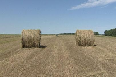 Константиновские аграрии перевыполнили план по заготовке кормов