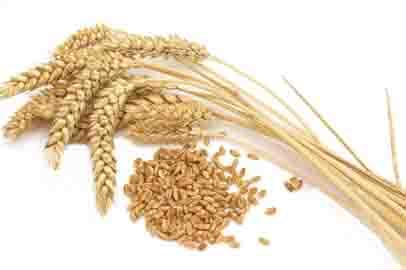 Приамурье планирует экспортировать пшеницу