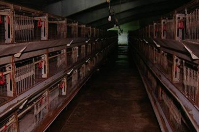 Спасти от ликвидации Николаевскую птицефабрику помогут областные власти