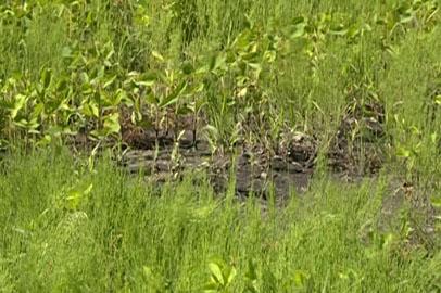 Областные власти инспектируют использование земель сельхозназначения в Приамурье