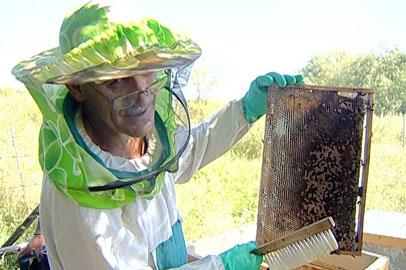 Амурские пчеловоды начали сбор меда позже обычного