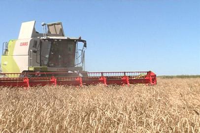 Урожайность ранних зерновых увеличилась почти на четверть