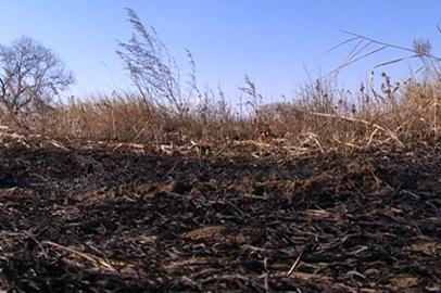 В Приамурье профилактические отжиги сухой травы провели на территории в 143 тысячи гектаров