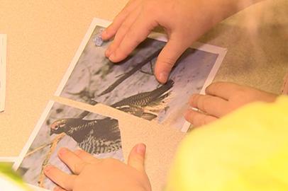 Природу Приамурья в теории и на практике изучают зейские малыши