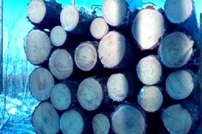 В Приамурье полицейские задержали с поличным черных лесорубов