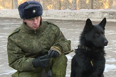 Амурскую пограничную собаку первую в стране наградили за задержание нарушителя