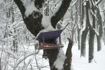 Столовую для птиц и белок организуют в Белогорске