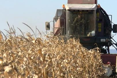 Амурские аграрии могут рассчитывать на дополнительную помощь от федерации