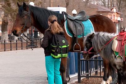 Мэрия ограничила катание на лошадях в центре Благовещенска