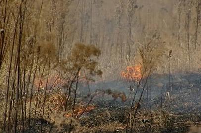 Сильный ветер повысит вероятность возникновения природных пожаров в области