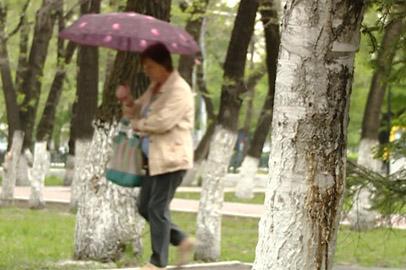 Дожди, грозы и сильный ветер задержатся в Приамурье до конца недели