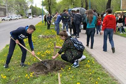 На аллее по улице Горького в Благовещенске высадили клены