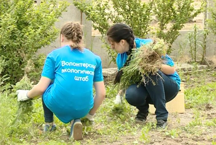 Амурчан призывают к участию в акции «Чистый двор»