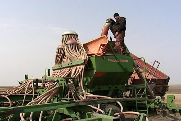 Амурские растениеводы завершили сев пшеницы и ячменя