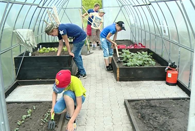 Проект «Гарденотерапия» в поярковской школе принес первые плоды