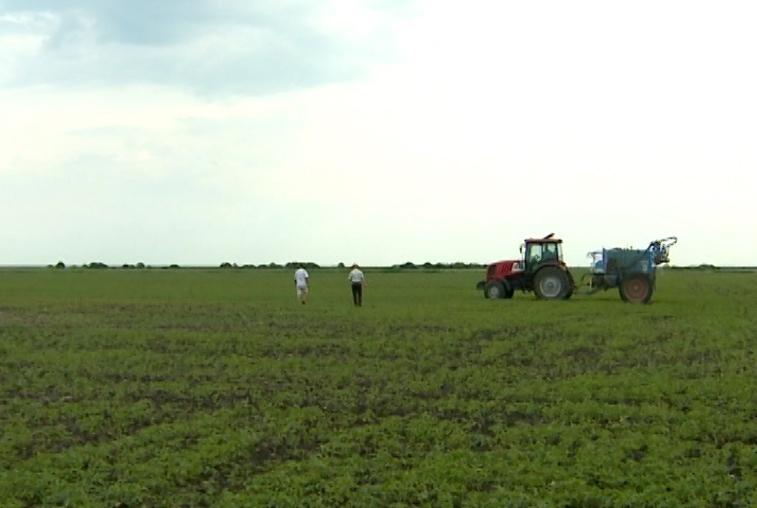 Амурский Минсельхоз советует аграриям застраховать посевы