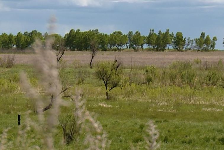 В Приамурье выдано около 3 тысяч бесплатных гектаров