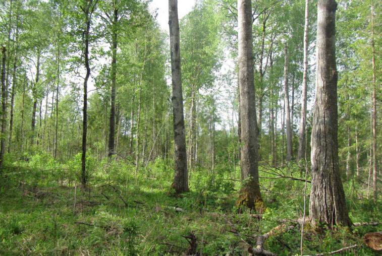 В Селемджинском и Зейском районах отменен режим ЧС в лесах