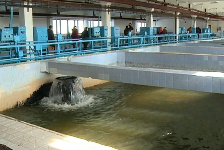 Благовещенцам рекомендуют кипятить воду из-за высокого содержания хлора