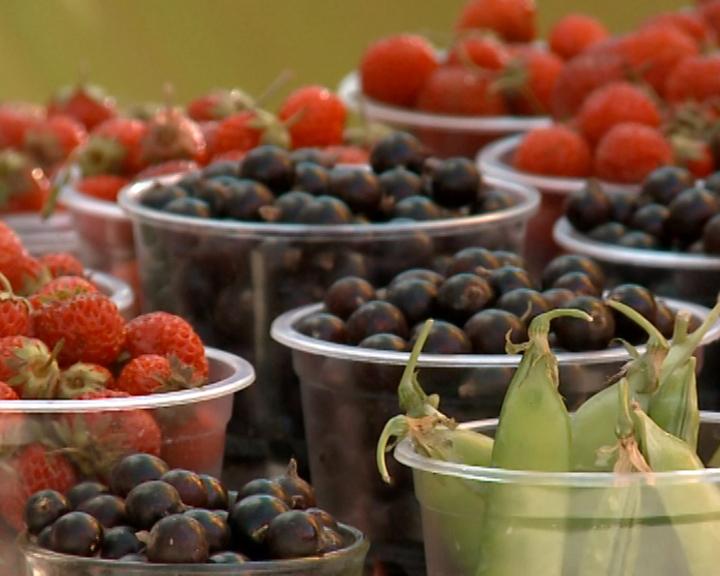 Областные власти выделят гранты для развития ягодного хозяйства