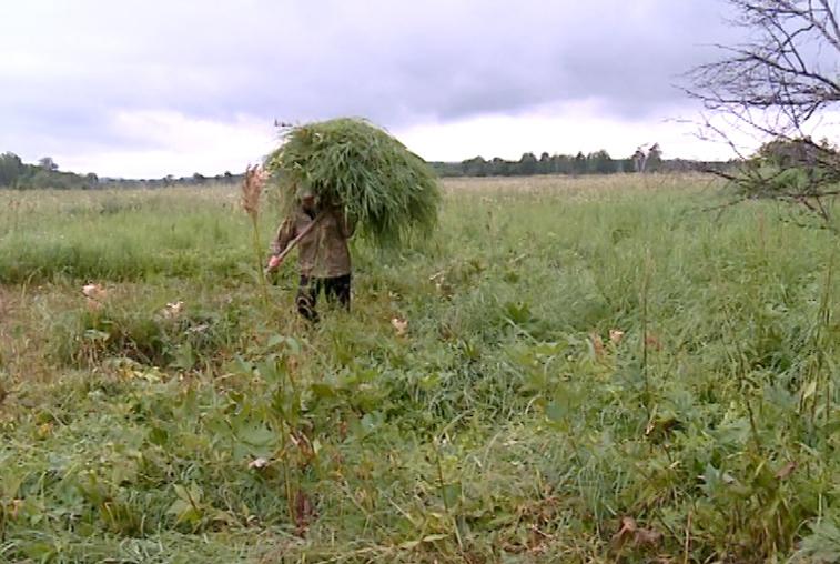 Обладатели гектаров в Приамурье получили 17,5 млн рублей субсидий