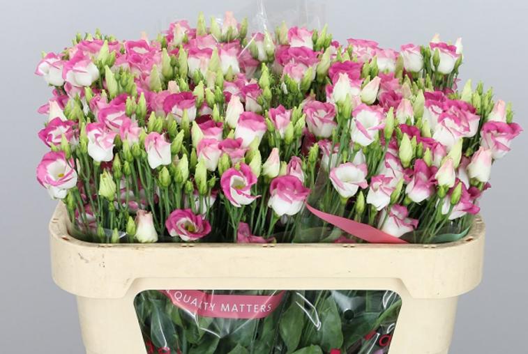 К 1 сентября в Приамурье поступило свыше 200 тысяч заграничных цветов