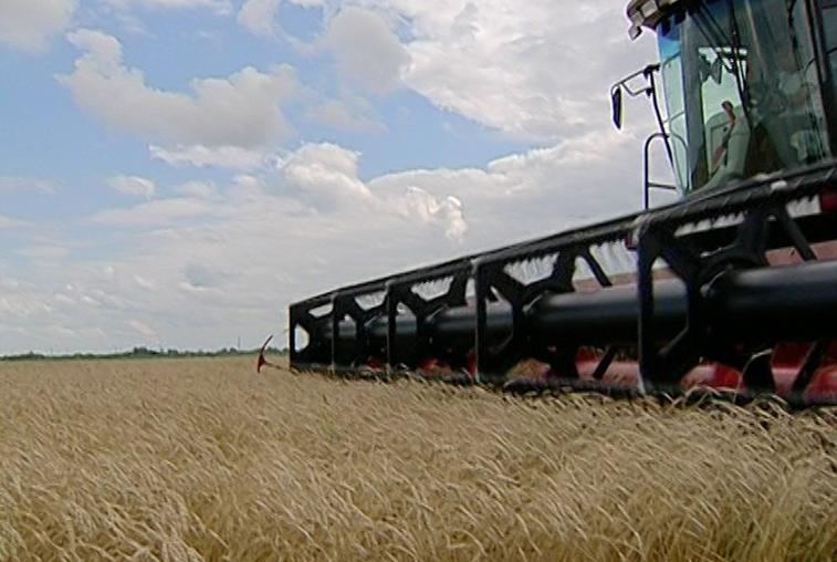 Растениеводы Приамурья завершают уборку зерновых