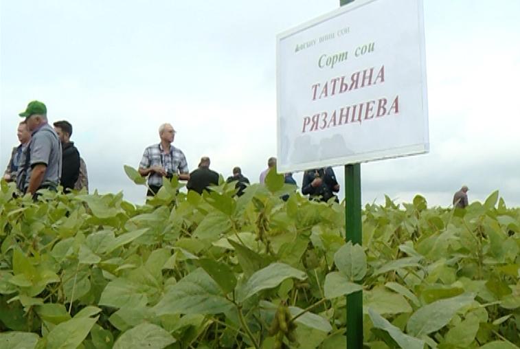 Сок из сои: Современные технологии производства и переработки бобовых обсуждают на конференции в Приамурье