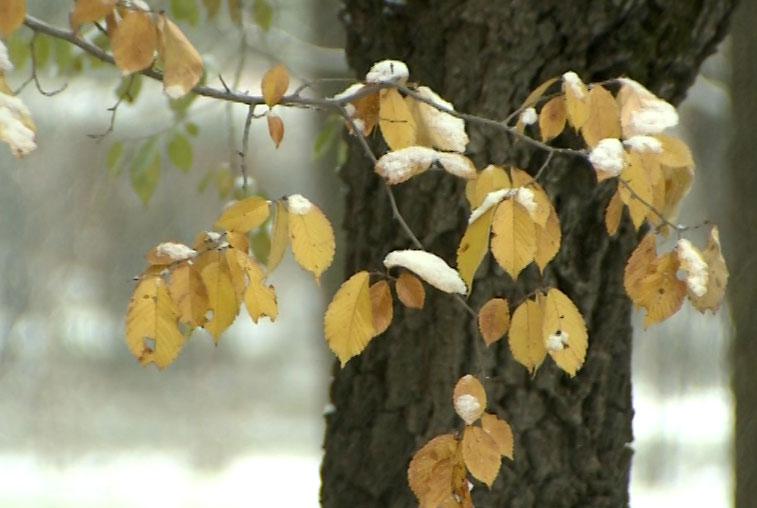 Синоптики рассказали, какой будет зима в Приамурье
