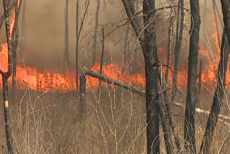Жителя Архаринского района приговорили к исправительным работам за лесной пожар