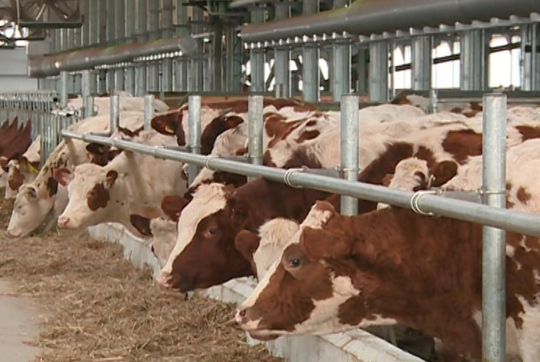 Автоматизированную молочную ферму открыли в Тамбовском районе