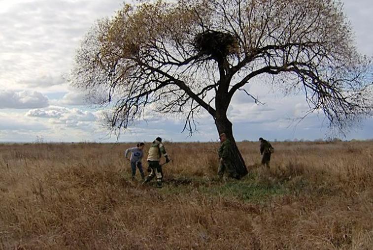 Амурские экологи защищают гнезда аистов от огня