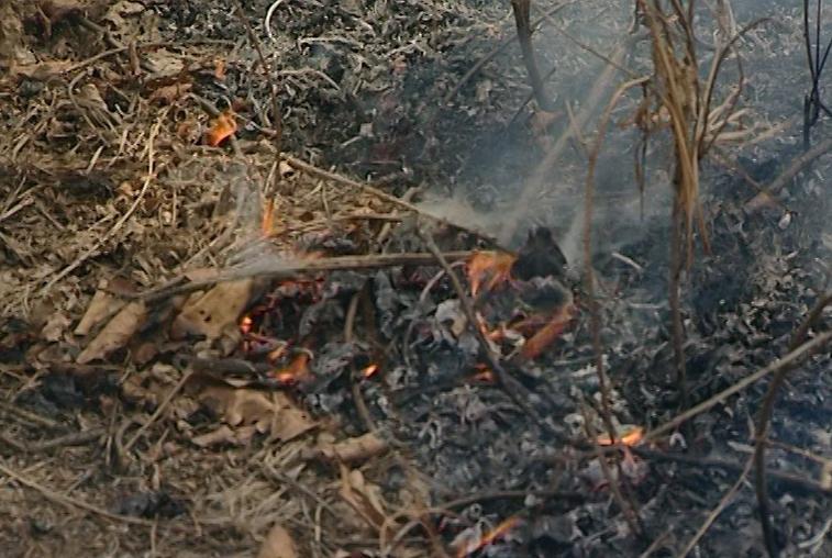 Пожар в Хинганском заповеднике мог возникнуть из-за поджога