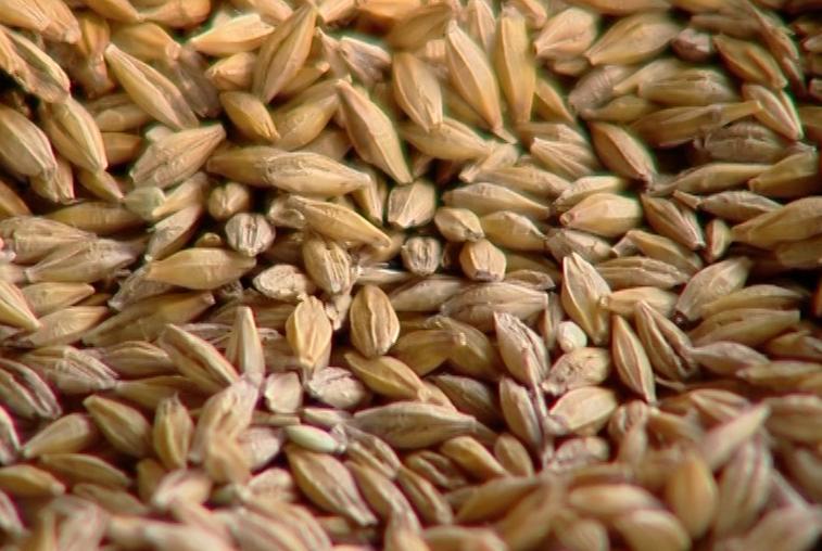 Амурская область получила разрешение на экспорт зерновых в Китай