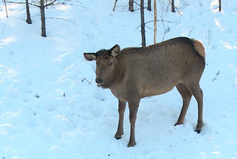 В Приамурье заготавливают корма для диких зверей и птиц
