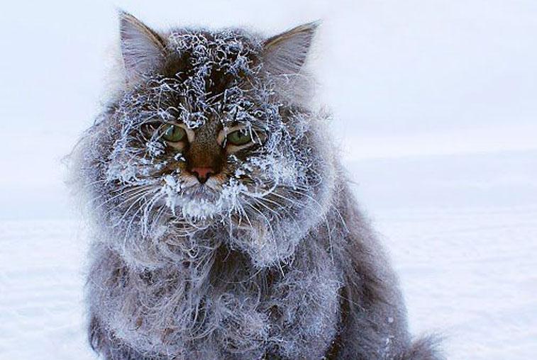 Настоящие зимние морозы придут в Приамурье в ближайшие дни