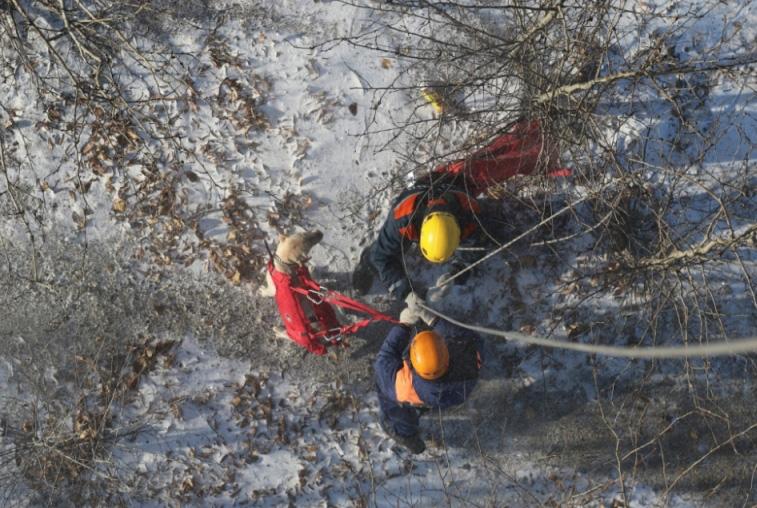 Амурские спасатели учились десантироваться с собаками без парашюта