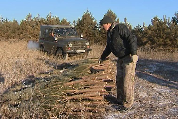 Продажа новогодних деревьев в Благовещенске начнется 1 декабря